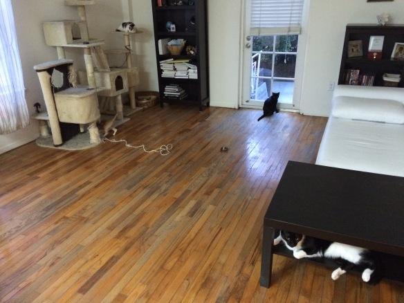 A cat refuge